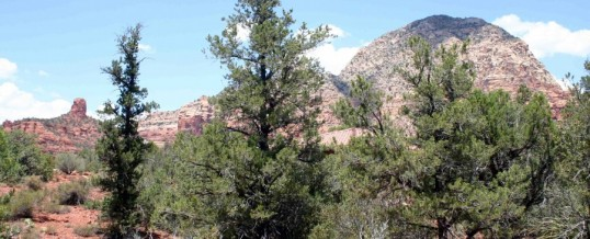 2215 Mule Deer, Sedona AZ Land for Sale